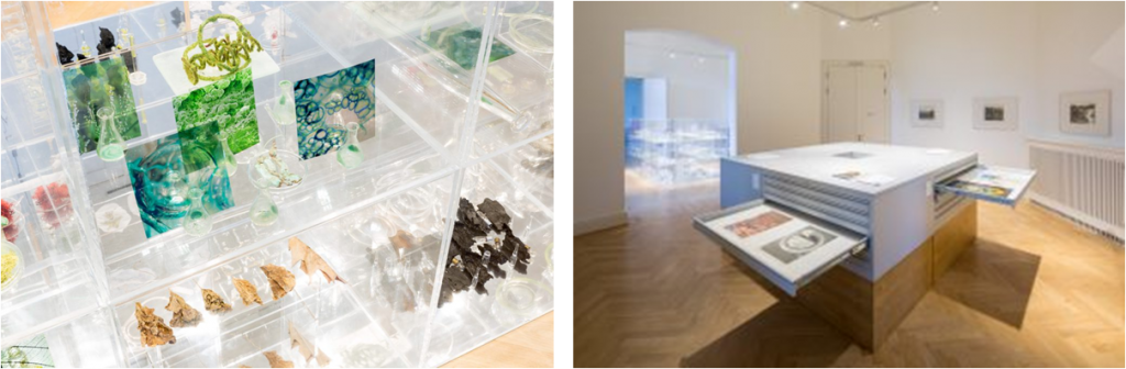 "Left: Janet Laurence: ""Waiting - A Medicinal Garden for Ailing Plants"" Installation view (Photo: Frank Sperling); Right: The archive cabinets present graphic portfolios from ""Kunstarchiv Beeskow"" (Photo: Frank Sperling)"
